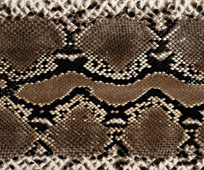 scorpio-print-pattern