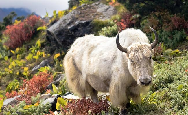 Immovable Stubborn Meet Taurus The Bull Headed Sign