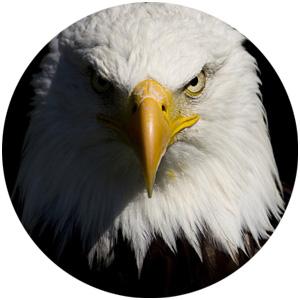 scorpio-eagle